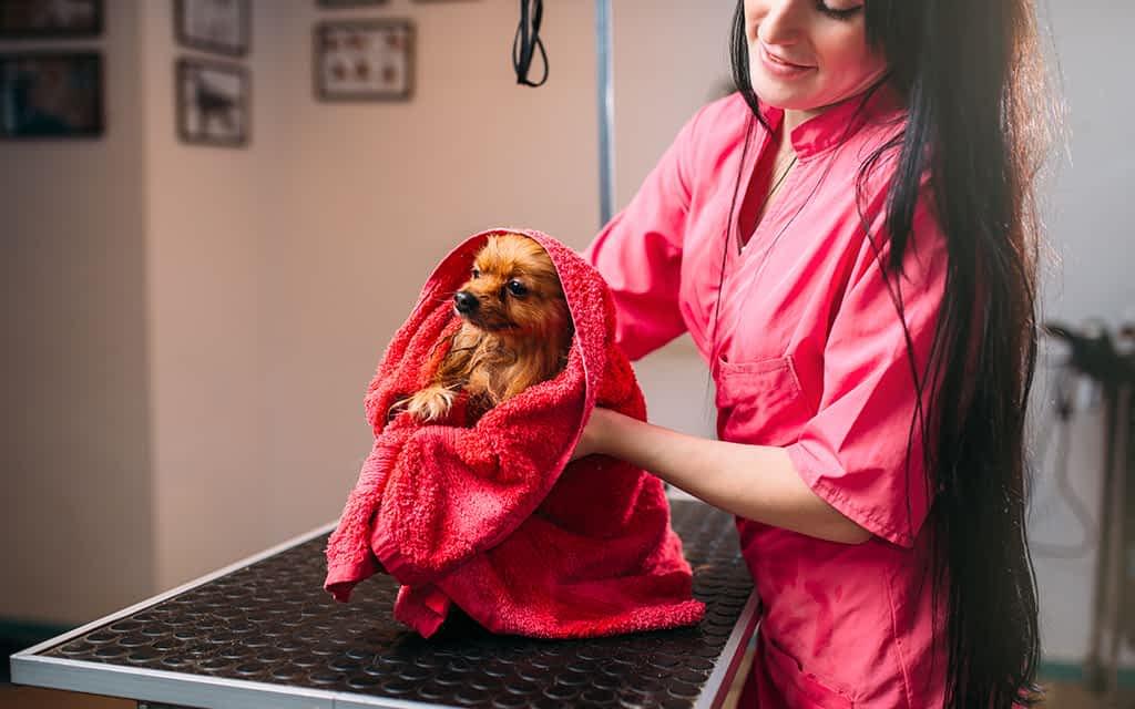 Pet Towels - Orahome
