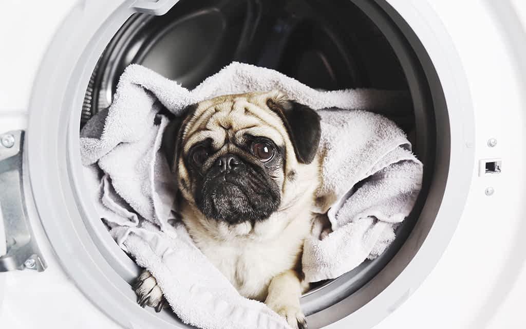 Beautifull Pets & Pet Towels - Orahome